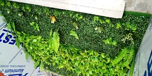Boxwood Artificial Grass/Plant Wall Panels