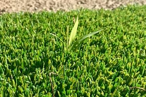 How to Stop Weeds From Growing on Artificial Grass