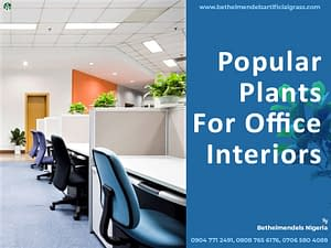 Read more about the article Popular Plants For Office Interiors
