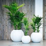 Why Choose a Fiberglass Planter