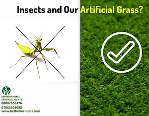 Insects and Our Artificial Grass