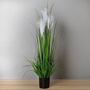 Read more about the article Reed Grass Plant