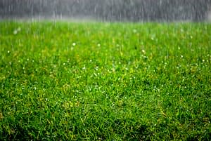 Tips to Keep Artificial Grass Looking Great When It Rains