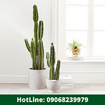 3 Health Advantages of Keeping Cactus Plant in Your Home